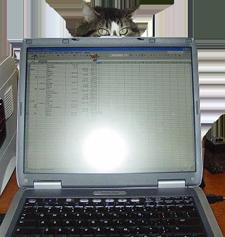 Roxanne Behind Computer